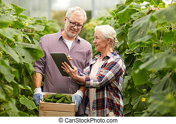 senior couple with cucumbers and tablet pc on farm -...