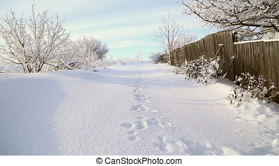 Hare tracks in the snow near a wooden fence, beautiful snowy...