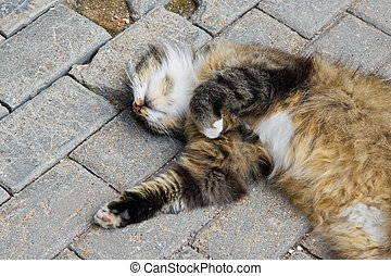 cat sleeps on path in park - cat sleeps on stone path in the...