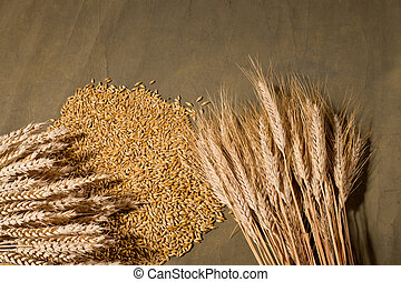 sheaf of wheat and barley on the brown desk