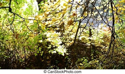 Beautiful autumn leaves in park. backlit - A Beautiful...