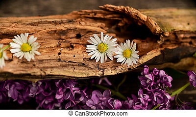 Flowers log - An old fallen tree with flowers