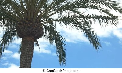 Palm tree on sky background. Long green branches. Warm...