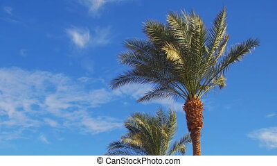 Palm Trees Against a Blue Sky. Summer Background - Palm...