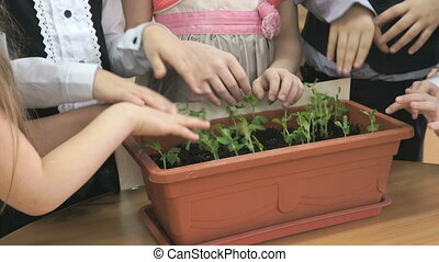 Little children playing on table with plants. Close-up