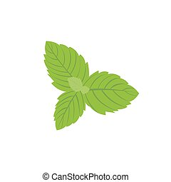 Vector fresh mint leaves on a white background eps10