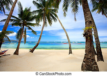 Perfect tropical beach with palm trees