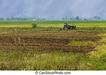 Agriculture plowing tractor on wheat cereal rice fields