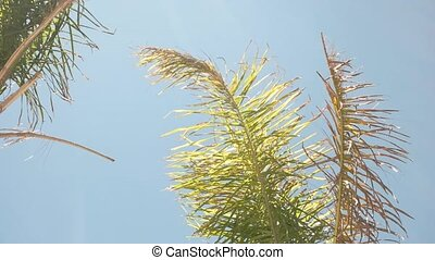 Plant moving in the wind. Palm tree leaves and sky....
