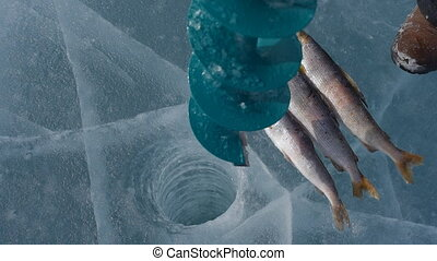 Winter fishing on the lake. - Fish on the ice of Lake...