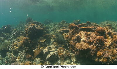 Hard and soft corals. - Colorful reef with healthy hard and...