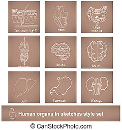 human organs in sketches style set