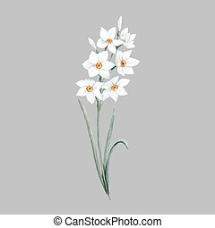 Watercolor small daffodil flower - Beautiful vector...