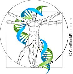 Vitruvian Man DNA - DNA Vitruvian man medical research...