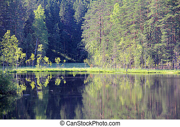 Lake beach and forest - Large river and forest on the banks