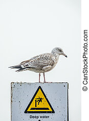 Seagull on top of a warning sign