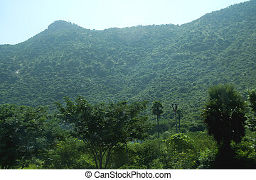 Green Mountain and Trees - Greenery everywhere at hill near...