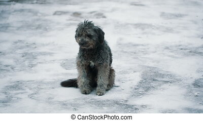 Homeless Dog at Winter - homeless dog sitting on the snowy...