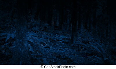 Moving Through Woodland At Night - Slowly moving through...
