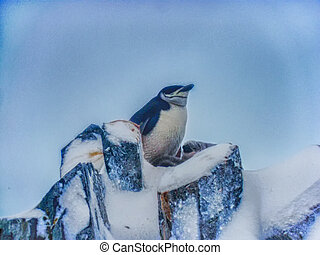 A Chinstrap penguin with two young - Chinstrap penguin with...