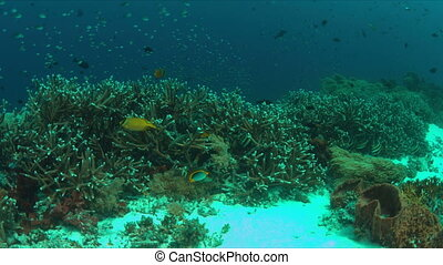 Coral reef with healthy hard corals and plenty fish -...