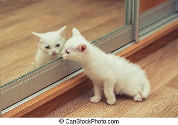 fehér, cica, lát, Tükör