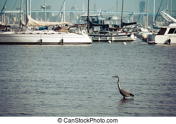 Fiddler's Cove - A crane sits in San Diego bay south of...