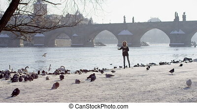 Slow motion feeding birds Charles bridge over Vltava river in capital of Czechia, Prague