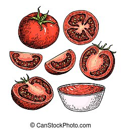 Tomato vector drawing set. Isolated tomato, sliced piece and...