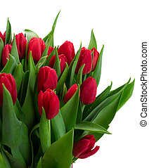 bouquet of red tulips - red tulips with green leaves close...