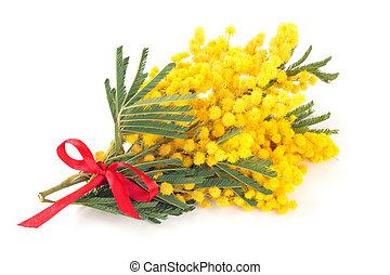 mimosa, ramo