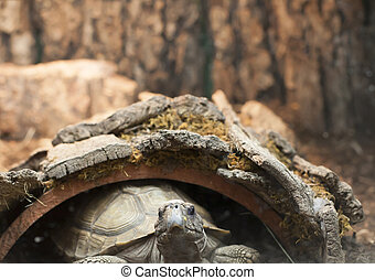 Turtle - Close up of a turtle in a hollowed out log