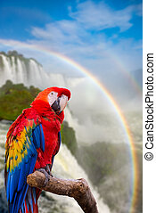 The macaw parrot at the Cataratas of Iguacu - The macaw...