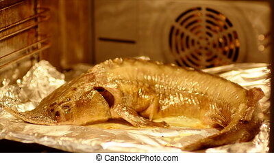 Home cooking of sturgeon in oven, traditional russian recipe
