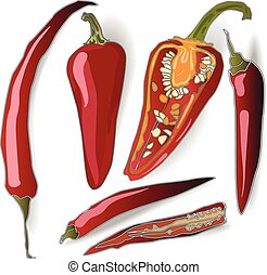 Chilli pepper isolated white background