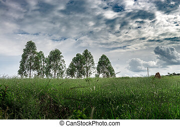 Few eucalyptus trees in Brazil forest. Its used for paper...
