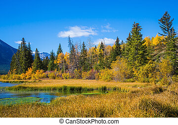 Autumn forest by the lake Vermilion - Beautiful Banff...