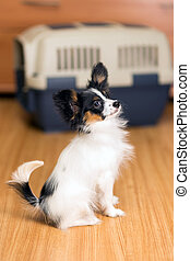Papillon puppy and travel plastic carrier for pet