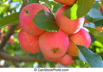 All Seasons Apple Orchard - This photo was taken at Apple...