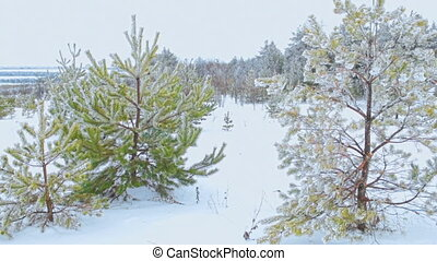 Cross-country skiing in nature - Aerial Cross-country skiing...