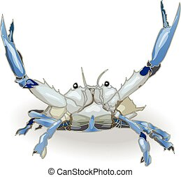 crab isolated white background