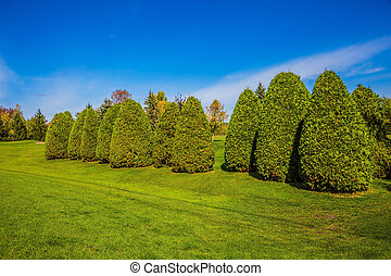 Decorative trimmed bushes on a green grass golf course. The...