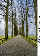 Endless road one - Endless road between an avenue of bare...