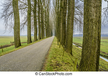 Endless road seven - Endless road between an avenue of bare...