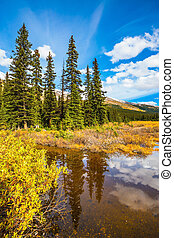 The boggy valley in the Rocky Mountains of Canada. The...