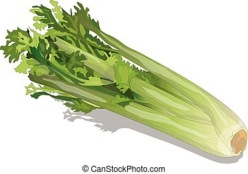 Celery isolated vector - Celery isolated on white backgrond