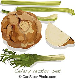Celery vector collection isolated on white backgrond