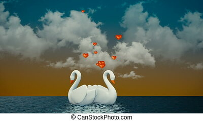 Couple of swans - Romantic Couple of swans swimming