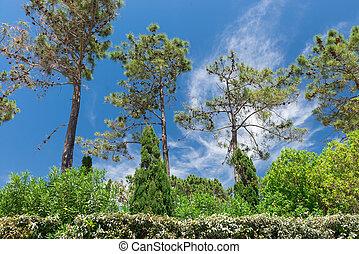 Green in Wolf Valley (Vale do Lobo), Algarve, Portugal