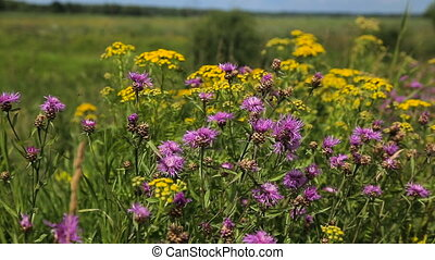 Beautiful wildflowers on the meadow.